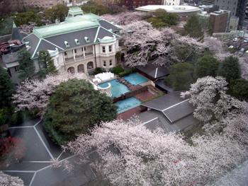 2010sakura5.jpg