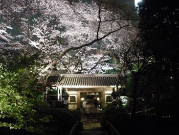 2010sakura6.jpg