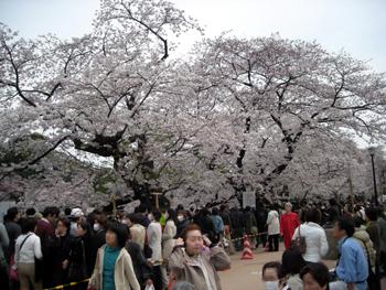 chidorigafuchi3.jpg